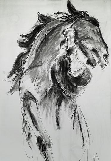 cheval -fusain 80 x120 cm avec cadre